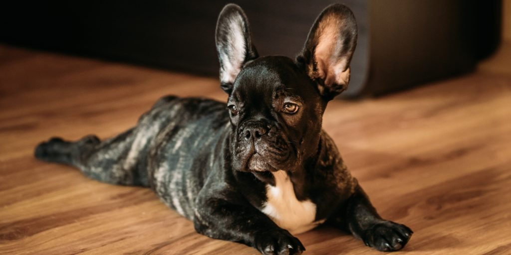 Pet friendly flooring options, flooring for pets from Trinity Surfaces